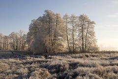 Bäume mit Raureif auf einem eiskalten Wintermorgen am warmen Morgen Stockbilder