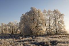 Bäume mit Raureif auf einem eiskalten Wintermorgen am warmen Morgen Stockfoto