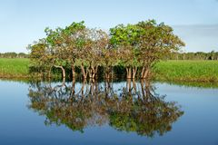 Bäume mit Reflexionen Lizenzfreies Stockbild