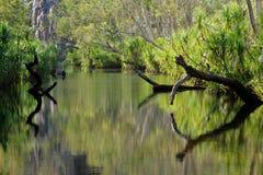 Bäume mit Reflexionen lizenzfreies stockfoto