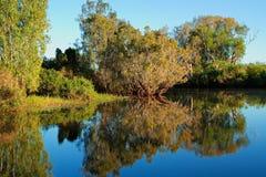 Bäume mit Reflexionen Stockfotografie