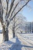 Bäume mit Reif auf dem Straßenrand Lizenzfreie Stockfotografie