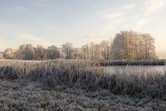 Bäume mit Reif auf einem eiskalten Wintermorgen Lizenzfreies Stockfoto