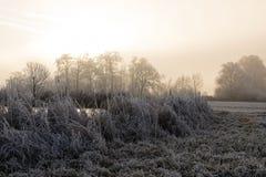 Bäume mit Reif auf einem eiskalten Wintermorgen Stockfotos