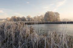 Bäume mit Reif auf einem eiskalten Wintermorgen Lizenzfreie Stockbilder