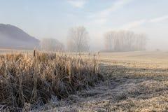 Bäume mit Reif auf einem eiskalten Wintermorgen Stockbild