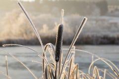 Bäume mit Reif auf einem eiskalten Wintermorgen Lizenzfreies Stockbild