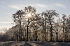 Bäume mit Reif auf einem eiskalten Wintermorgen Stockbilder