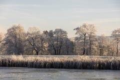 Bäume mit Reif auf einem eiskalten Wintermorgen Stockfoto