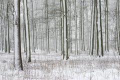 Bäume mit Schnee lizenzfreie stockfotos