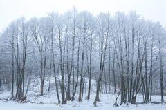 Bäume mit Schnee Stockfotografie