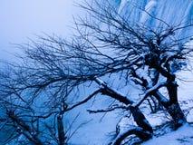 Bäume mit Schnee durch Wasserfall Lizenzfreie Stockbilder