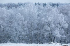 Bäume mit Schnee im Winterpark Lizenzfreies Stockfoto