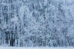 Bäume mit Schnee im Winterpark Stockbilder