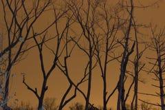 Bäume mit Stadt-Glühen stockfoto