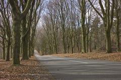 Bäume mit Straße Lizenzfreie Stockbilder