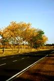 Bäume mit Straße Lizenzfreies Stockfoto