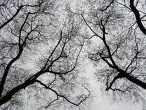 Bäume mit toten Niederlassungen Stockbild