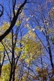 Bäume mit wenigen farbigen Blättern im Fall Lizenzfreie Stockfotografie
