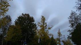 Bäume mit wunderbarem Hintergrundhimmel lizenzfreies stockfoto