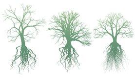 Bäume mit Wurzeln Lizenzfreies Stockfoto