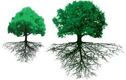 Bäume mit Wurzeln Lizenzfreie Stockfotos