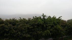 Bäume am Morgen Lizenzfreie Stockfotos