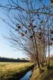 Bäume nähern sich dem Fluss Lizenzfreie Stockfotografie