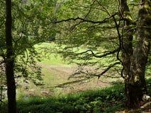 Bäume nähern sich Wasser Stockbild