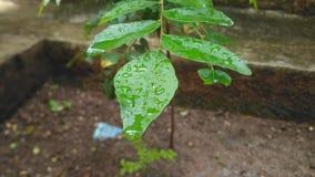 Bäume naß im Regen Stockfotografie