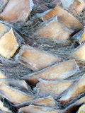 Bäume - Nahaufnahme des Palmenkabels Stockbilder