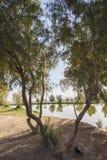 Bäume nahe bei einem Teich im ländlichen Park Stockfotografie