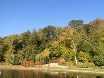 Bäume nahe dem See Lizenzfreie Stockfotos
