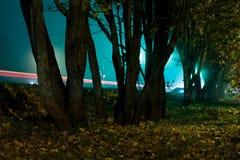 Bäume nahe der Straße am Nachtfoto mit Ausdauer lizenzfreie stockfotos