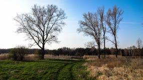 Bäume nahe Plavecky Peter lizenzfreie stockfotografie