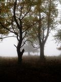 Bäume in Nebel 2 Stockbilder