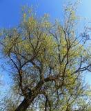 Bäume, Nord-Northumberland, England Lizenzfreies Stockbild