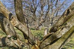 Bäume ohne Laub stockbilder