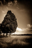 Bäume am Rand des Feldes Stockfotos