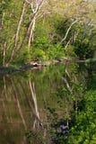Bäume reflektiert im Erie-Kanal, Ohio Stockbilder