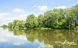 Bäume reflektiert im Wasser Stockbilder