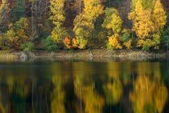 Bäume reflektiert im Wasserblatt Stockbild