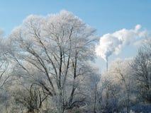 Bäume, Reif und Industrie Stockfotografie