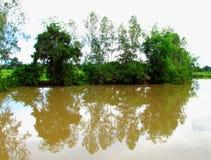 Bäume rudern auf dem Ufer und der Reflexion der Bäume im wa stockfotos