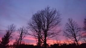 Bäume am schönen Himmel des Sonnenuntergangs Farb lizenzfreie stockfotos