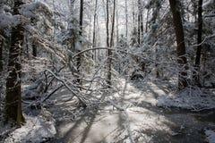 Bäume schneien eingewickelter Blizzard nachher Lizenzfreie Stockfotos