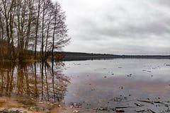 Bäume am See lizenzfreies stockbild