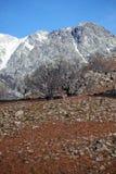 Bäume in Sierra de Gredos lizenzfreie stockfotos