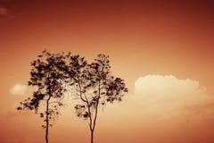 Bäume silhouettieren auf Sonnenuntergang Stockfotos