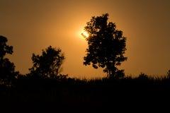 Bäume silhouettieren am Sonnenuntergang Stockfoto